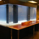 1200 gallon custom aquarium system for cafe centerpiece by Indoor Oceans