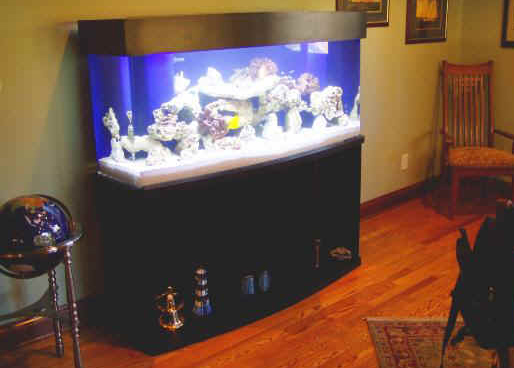 Stunning custom 120 gallon bow front saltwater aquarium by Indoor Oceans
