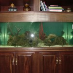 Beautiful custom aquarium bookshelf by Indoor Oceans