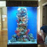 Stunning 220 gallon custom aquarium centerpiece in home by Indoor Oceans with artificial reef insert.