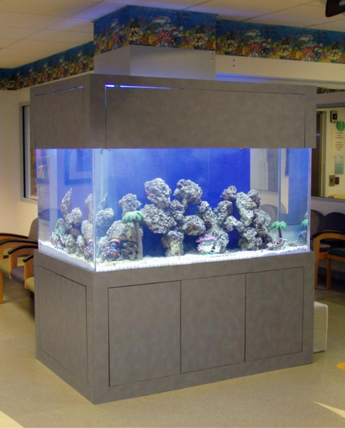 250 gallon L-shaped saltwater aquarium by Indoor Oceans