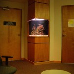50 gallon custom built in aquarium in physician office by Indoor Oceans