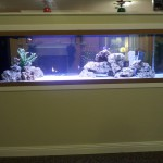 Elegant custom 125 gallon tank by Indoor Oceans built in to wall of home.