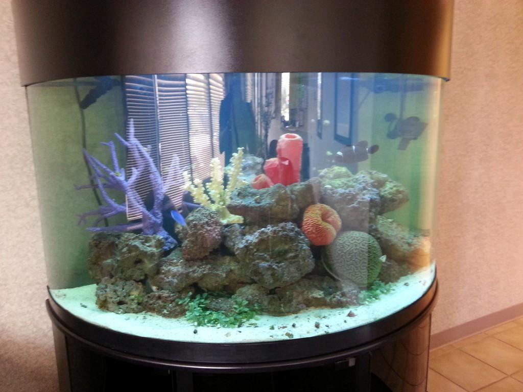 Captivating 150 gallon half cylinder salt water aquarium