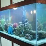 Custom 300 gallon saltwater aquarium