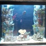 Beautiful built-in custom saltwater aquarium in restaurant