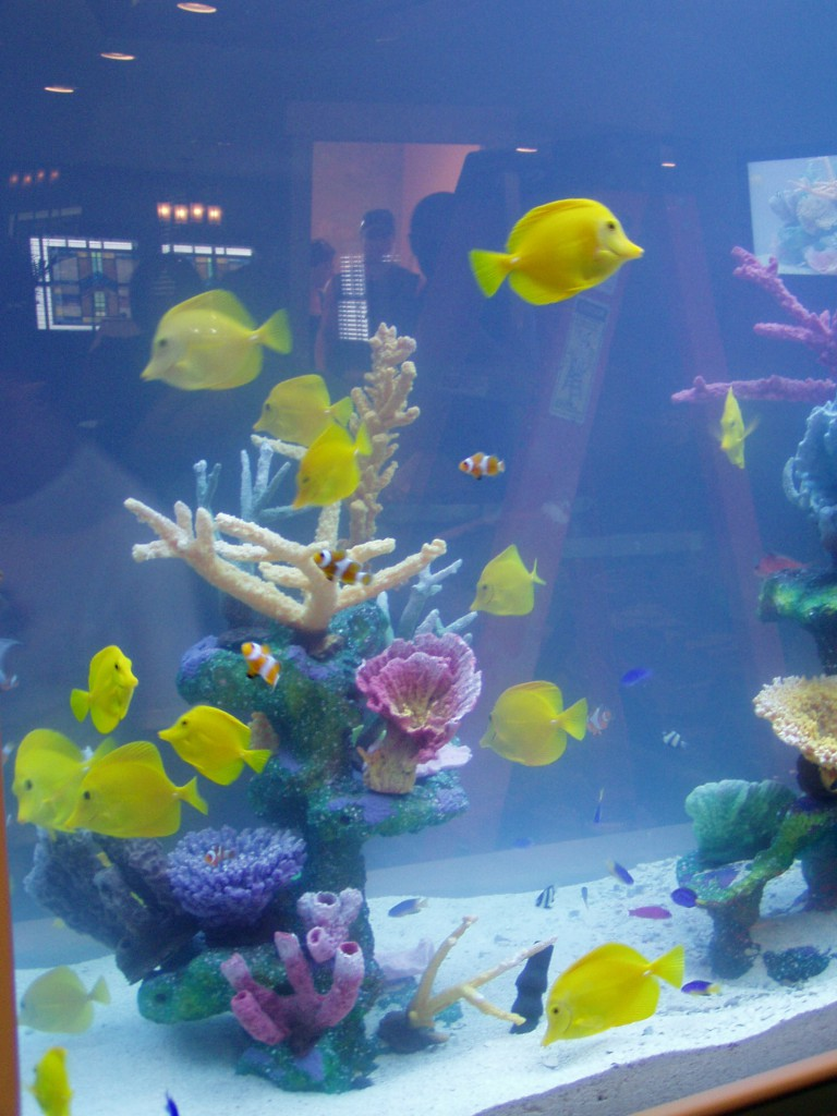 Happy, healthy fish cruising around their new underwater home by Indoor Oceans in the Extreme Makeover Rodriguez residence.