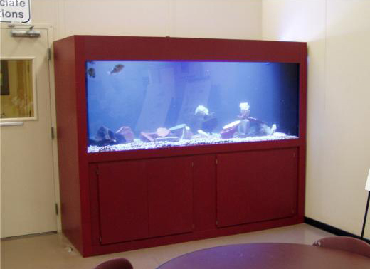 Peaceful 540 gallon custom freshwater aquarium system for office break room