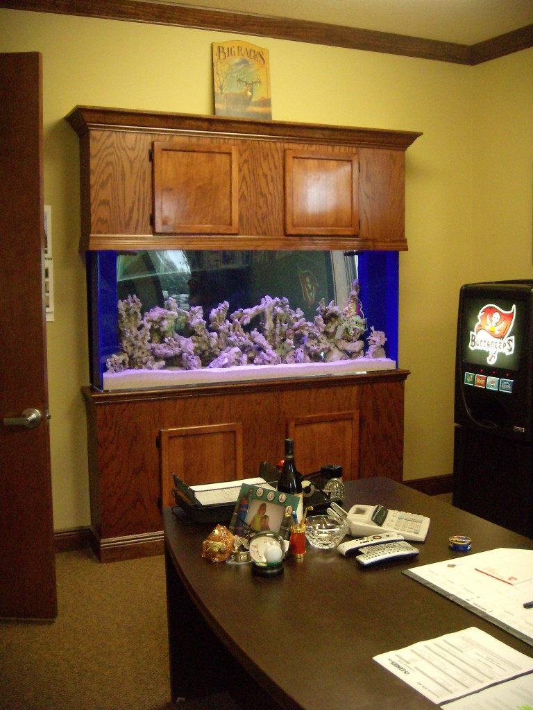 Office Divider Custom Saltwater Aquarium