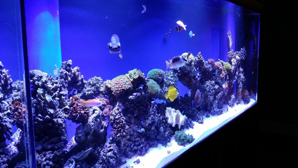 Various saltwater reef fish species happily swimming around in a custom tank by Indoor Oceans