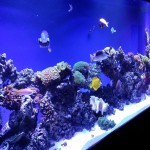 Various saltwater reef fish species happily swimming around in a custom tank by Indoor Oceans