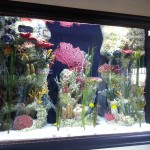Amazing custom saltwater aquarium for office lobby