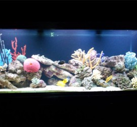 Large Saltwater Aquarium with LED Lights by Indoor Oceans