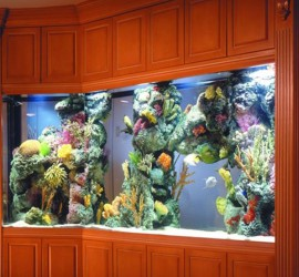 Custom Aquarium with Living Color Insert by Indoor Oceans