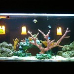 Attractive custom 125 gallon tank by Indoor Oceans