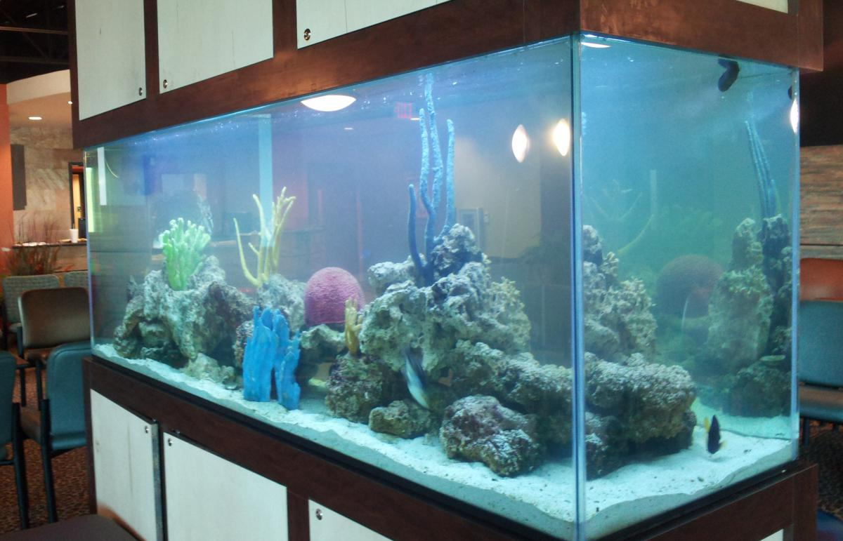300 gallon aquarium bing images for Used fish tanks for sale many sizes